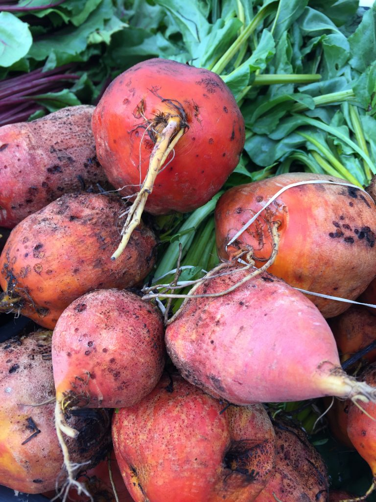 Golden beets - how to grow beets