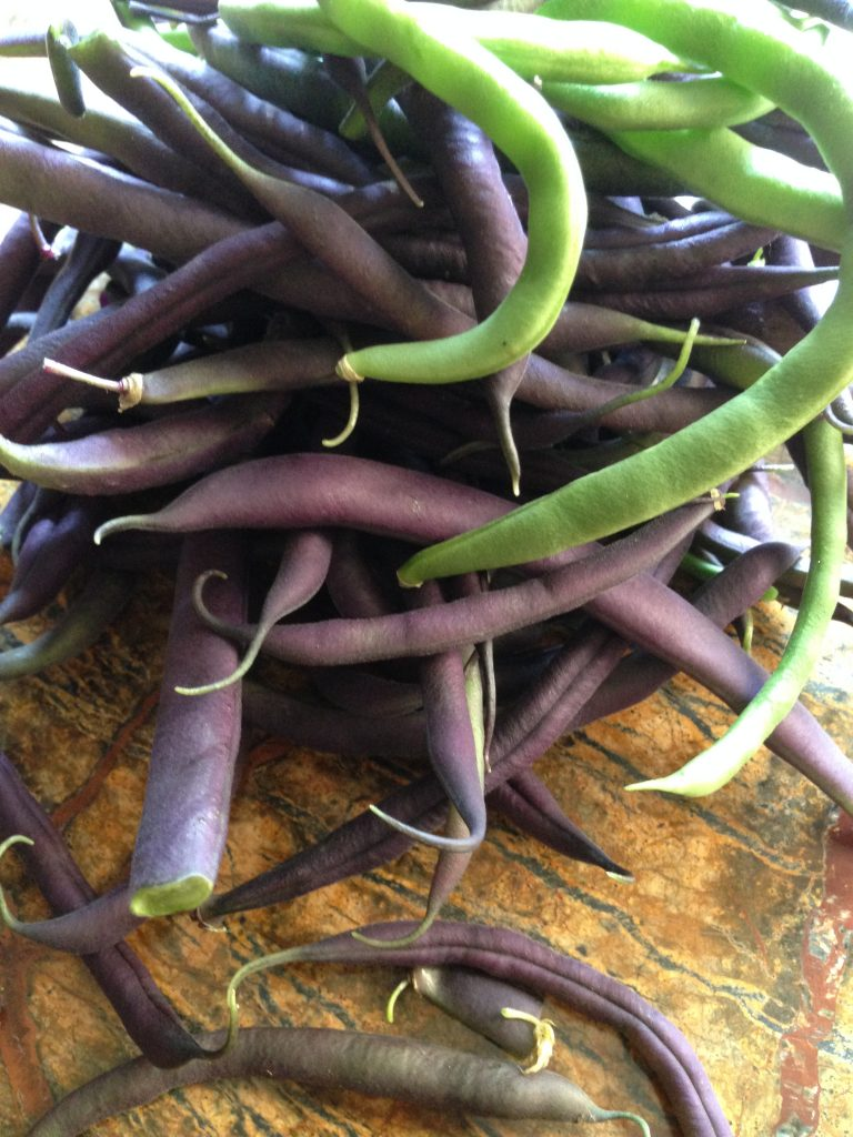 How to grow beans - purple & green beans