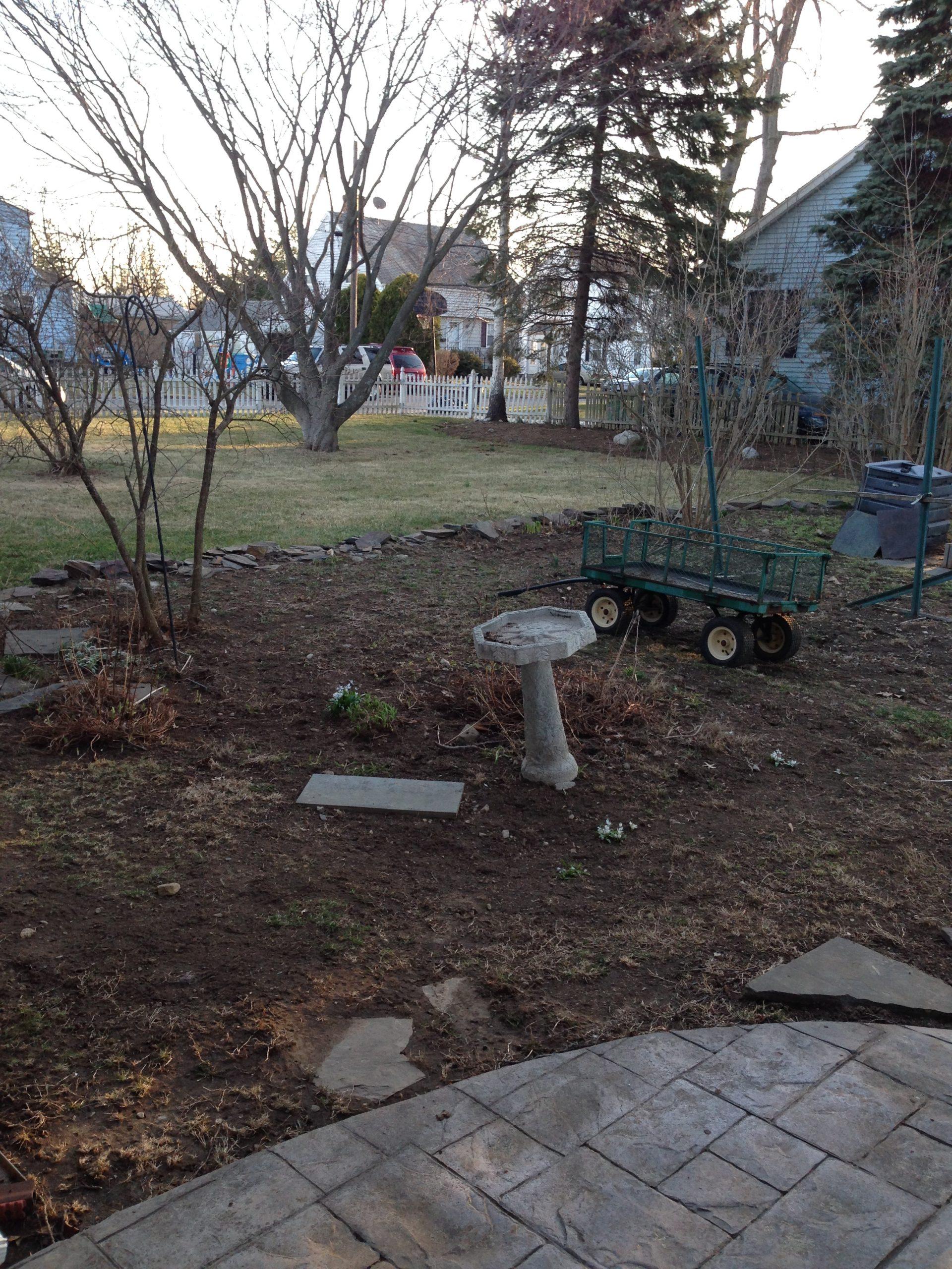 Starting a new vegetable garden from scratch.
