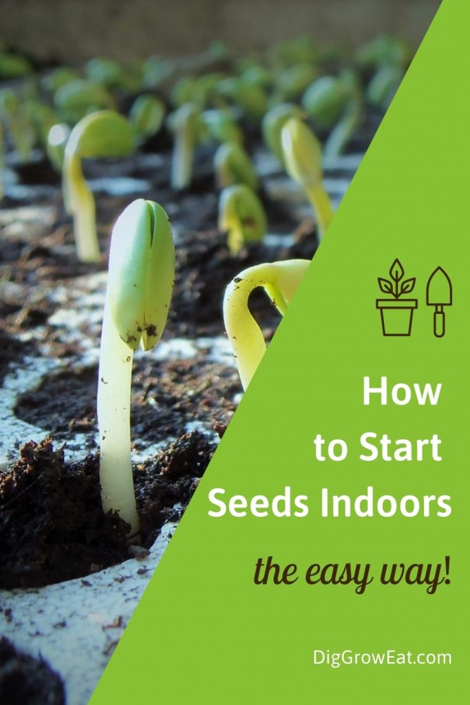 How to start seeds indoors - the easy way!