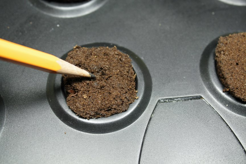 Place seeds into the peat plugs, and cover with peat, using the tip of a pencil - to start seeds indoors - the easy way.