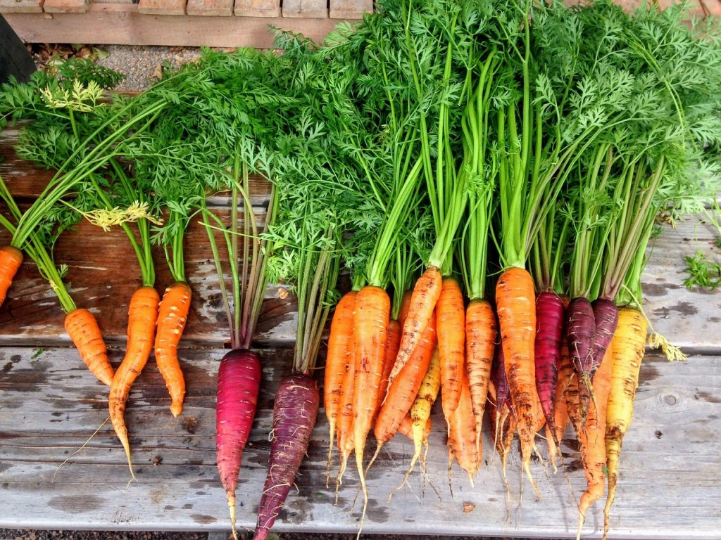 Different colored carrots - how to grow carrots