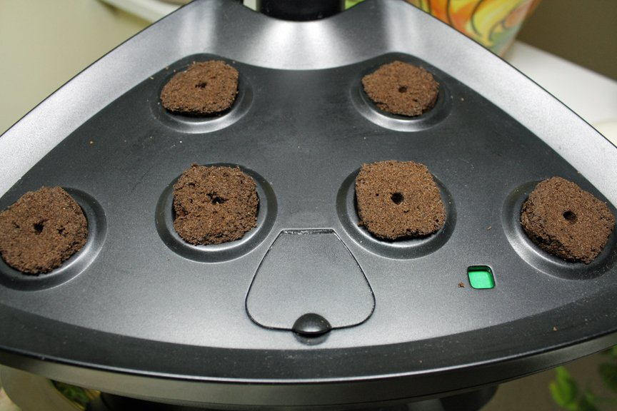 Insert peat plugs into the holes in the lid of the Aerogarden to start seeds indoors - the easy way.