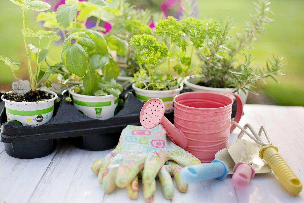 herbs in pots with gloves